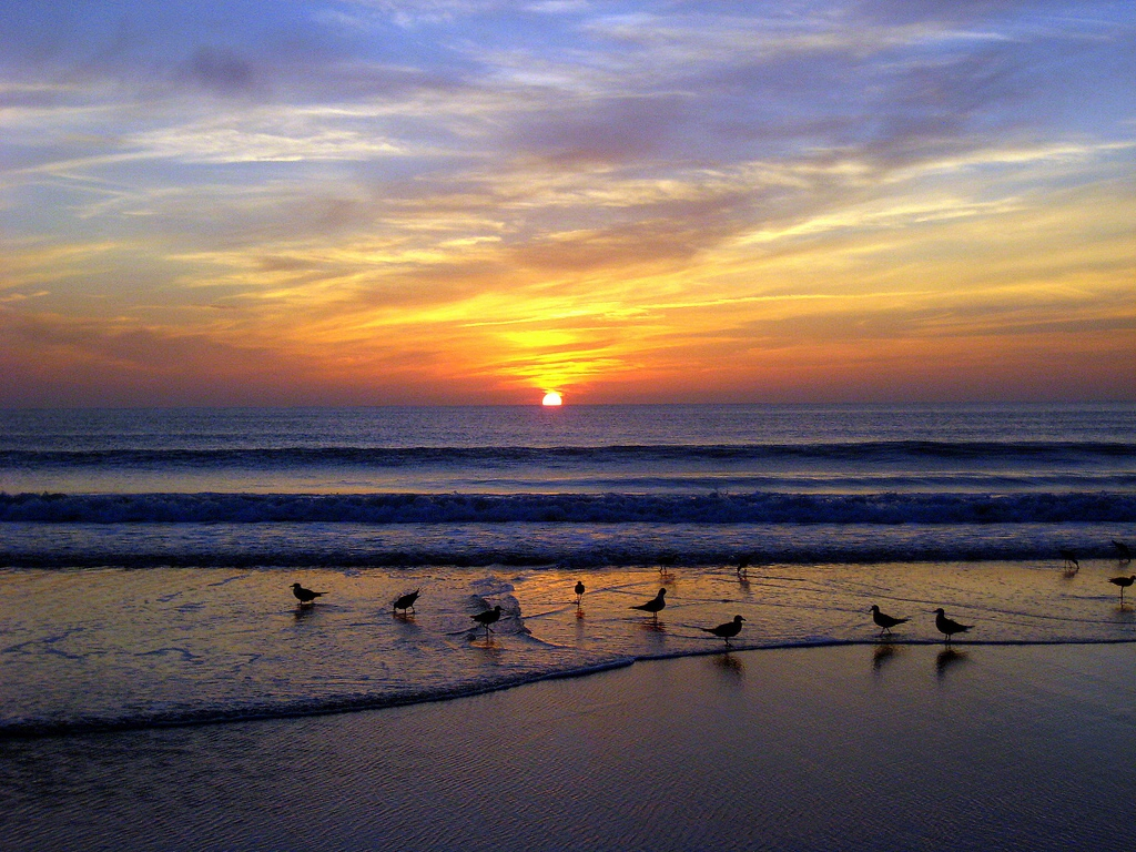 Sunrise with Gulls at Myrtle Beach