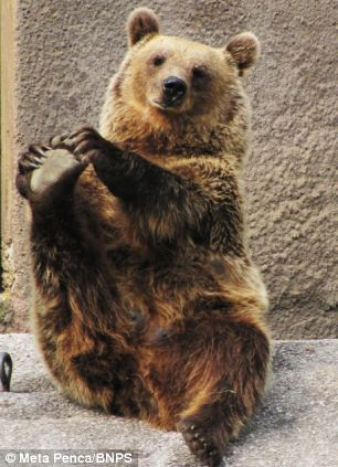 yoga-bear-santra