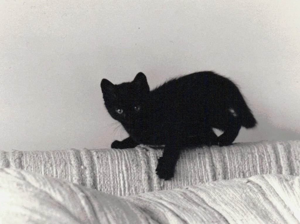 Slash, the Electro-cat, as a wild-eyed kitten.
