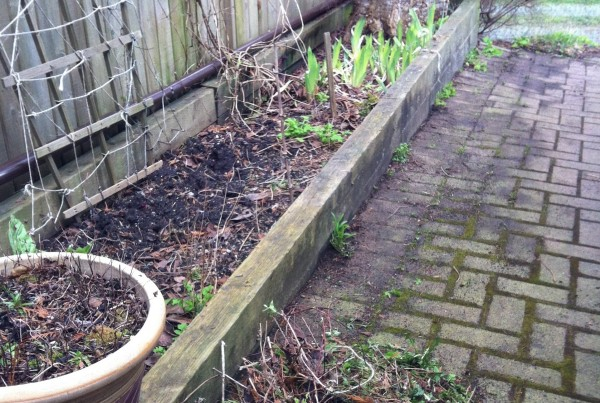 the border of a garden and a parking space, dandelions cleared away